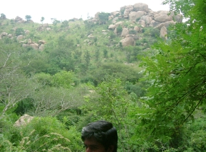 arunachala - from barren mountain to forested abundance