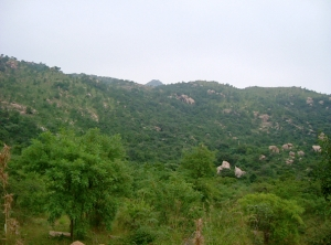 arunachala huge productivity- medicine, timber, bio-diversity, water re-flowing