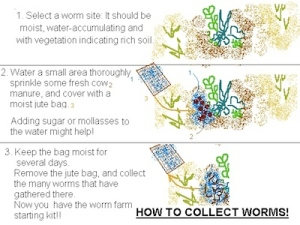 How to collect worms! - small
