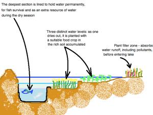 Lake profile for dry-season zone