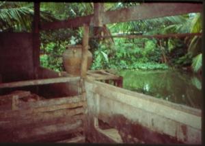 pigs-pond