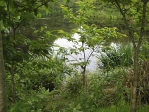 pond edge temp