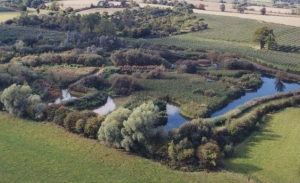 pond +wetlands max edge